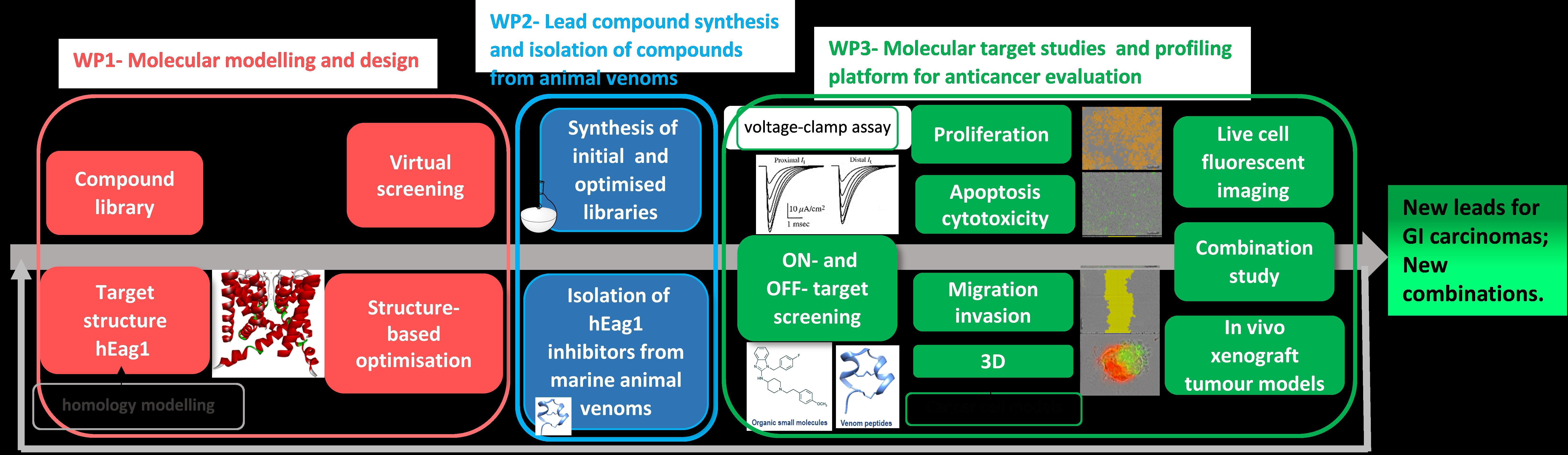 Odkrivanje in mehanizem delovanja novih spojin vodnic hEag1 kalijevih kanalov s protirakavim delovanjem faze